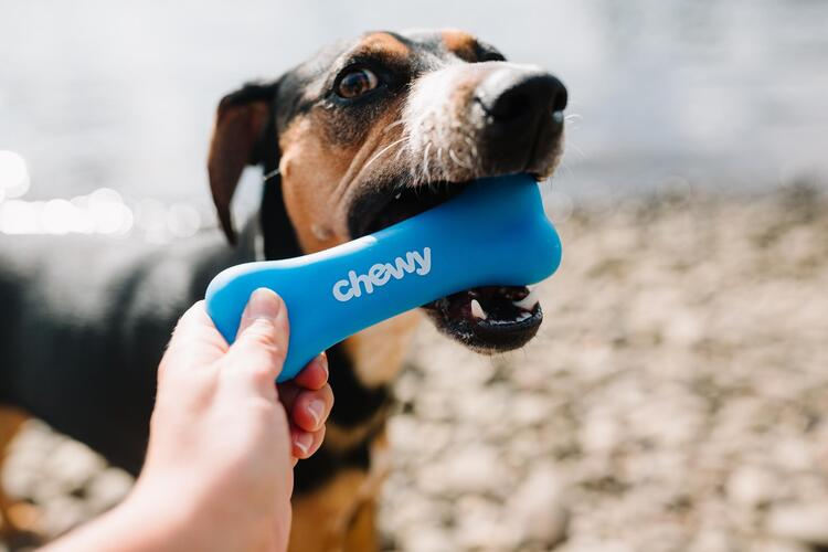 dog with toys - user generated content