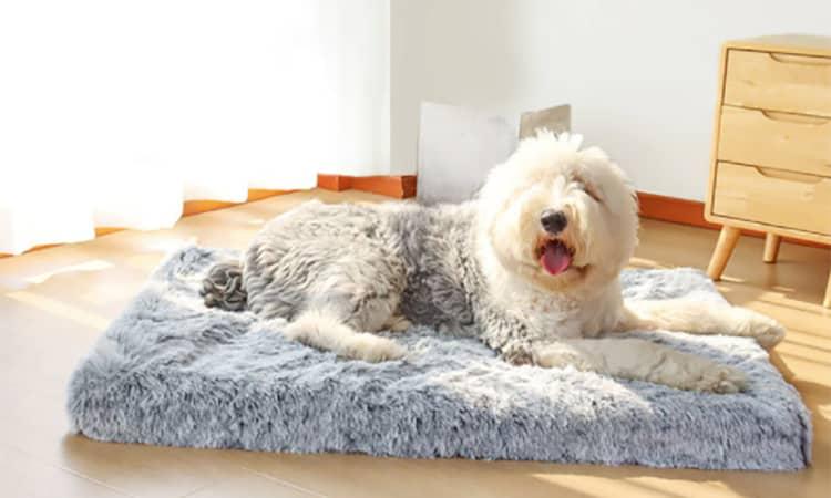 dog lying bed